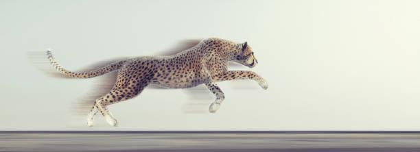 Ein schöner Gepard läuft auf weißem Hintergrund. Dies ist ein 3d Render-Darstellung – Foto