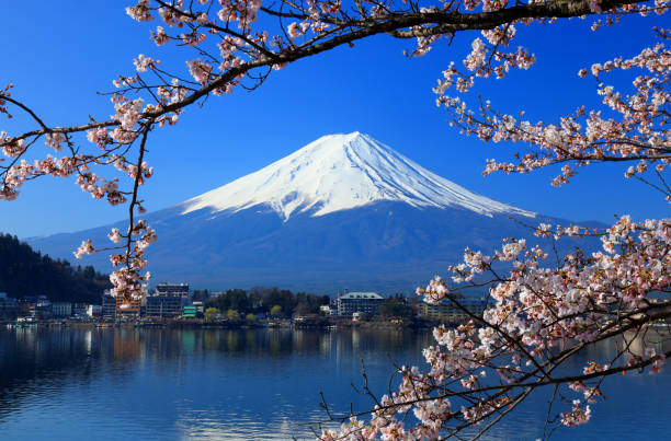 Beautiful cherry blossoms with Mount Fuji, japan stock photo