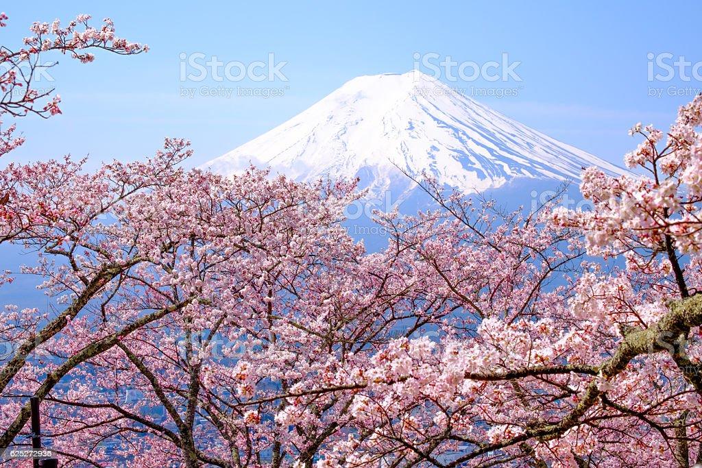 Beautiful cherry blossoms with Mount Fuji, japan stock photo