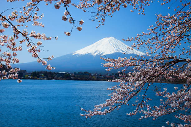 Beautiful cherry blossoms with Mount Fuji, japan Beautiful cherry blossoms with Mount Fuji, japan lake kawaguchi stock pictures, royalty-free photos & images