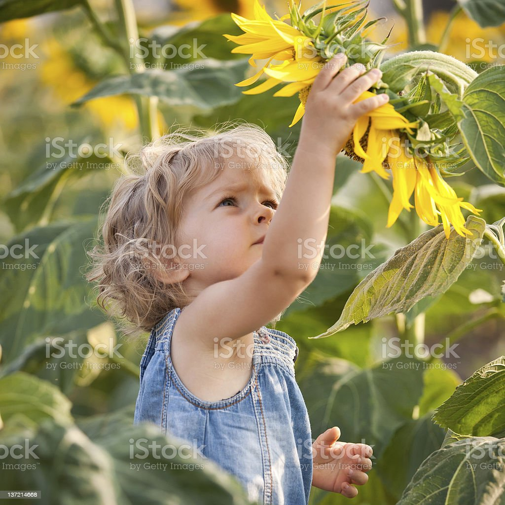 Beautiful child with sunflower royalty-free stock photo