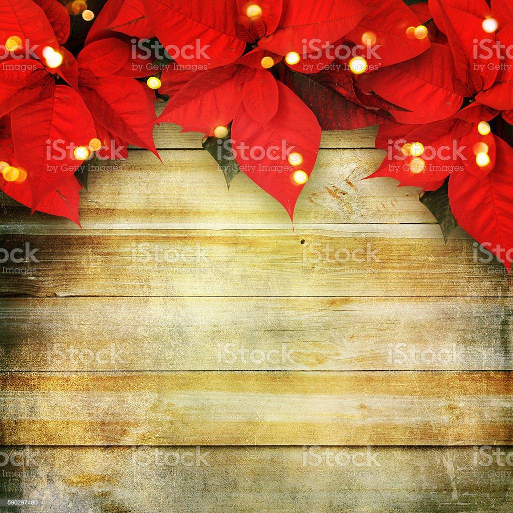 beautiful christmas background with red poinsettia Стоковые фото Стоковая фотография