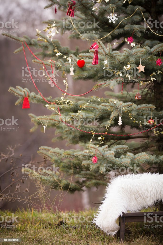 Image of: Beautiful Christmas Tree Outdoors Decorations Holidays Season Stock Photo Download Image Now Istock