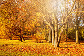 Autumn landscape, beautiful city park with fallen yellow leaves