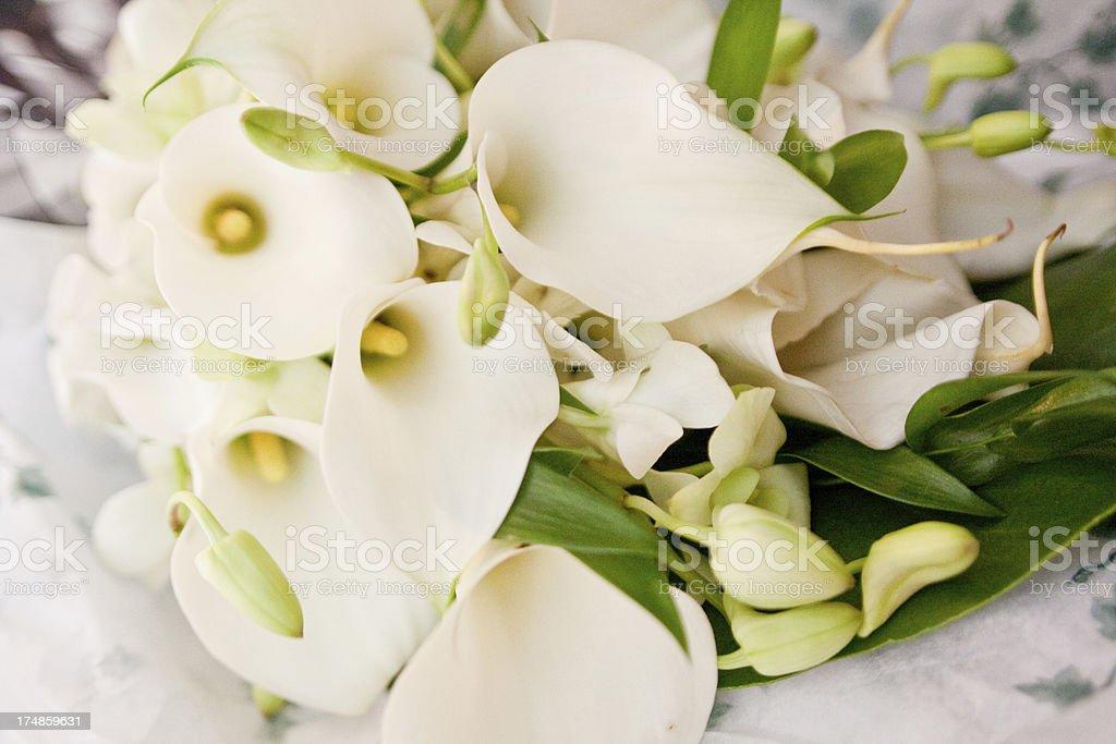 Beautiful Classic White Calla Lilies Wedding Bridal Bouquet royalty-free stock photo