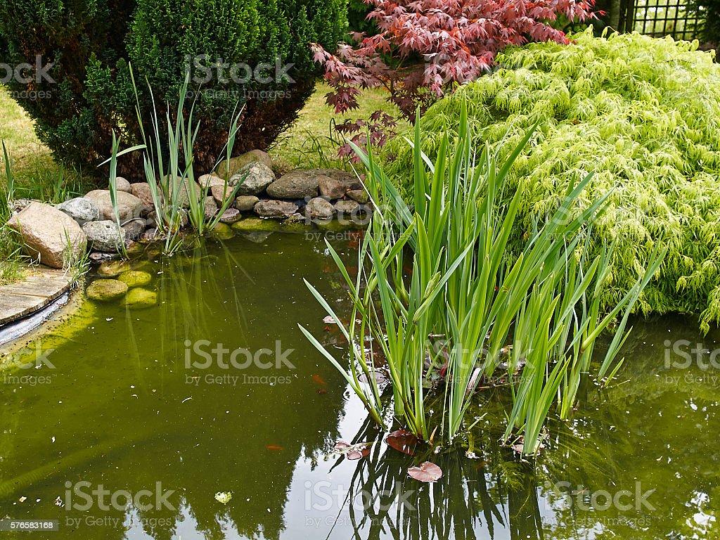 Photo Libre De Droit De Magnifique Jardin Classique Du