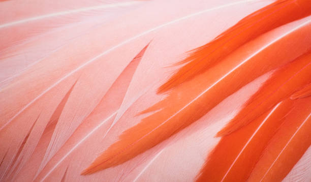 beautiful close-up of pink and orange flamingo feathers - femininity stock pictures, royalty-free photos & images