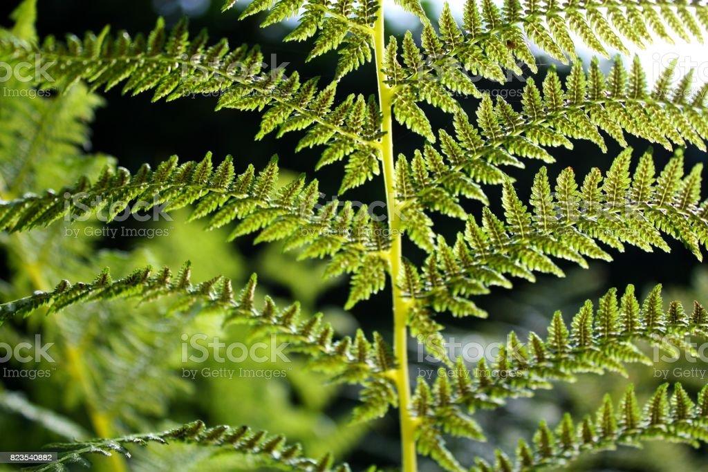 Beautiful close-up photo of bracken fern plant stock photo