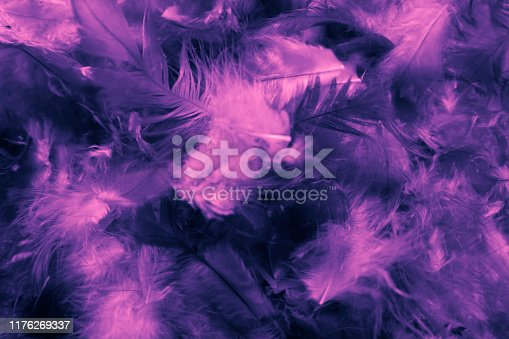 526788679istockphoto Beautiful closeup textures abstract colorful dark black white purple and pink feathers and darkness white pattern feather background and wallpaper 1176269337