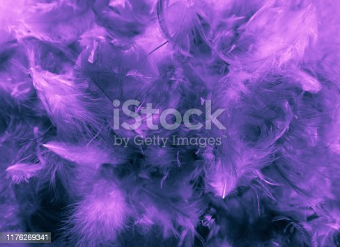 526788679istockphoto Beautiful closeup textures abstract colorful dark black white purple and pink feathers and darkness white pattern feather background and wallpaper 1176269341