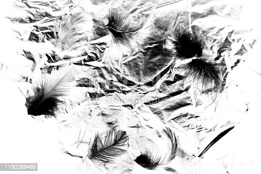 istock Beautiful closeup textures abstract the falling feathers black and white color isolated wall background and pattern 1150269495