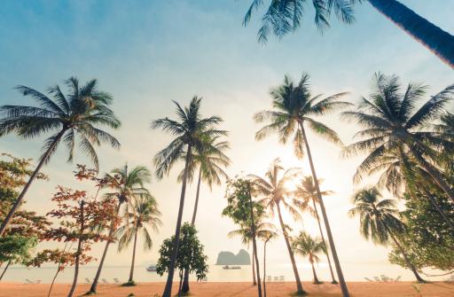 Beautiful Coconut tree at the beach