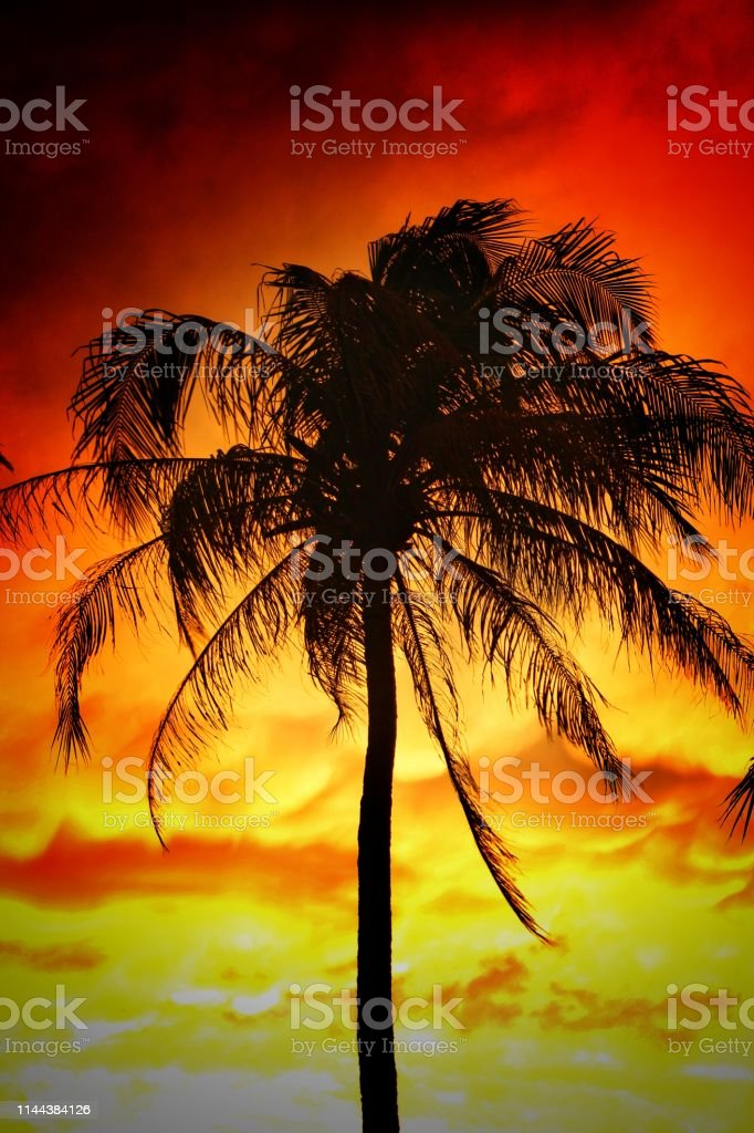 Beautiful Coconut Trees With Dramatic Sky Wallpaper Hd Stock