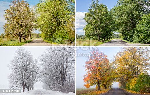Beautiful collage of 4 seasons, different pictures of an tree avenue, same spot, place. Spring foliage, green fresh bright summer day, foggy morning with yellow autumn leaves, snowstorm in winter.