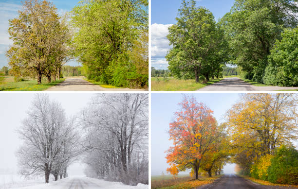 beautiful collage of 4 seasons, different pictures of an tree avenue, same spot, place. spring foliage, green fresh bright summer day, foggy morning with yellow autumn leaves, snowstorm in winter. - primavera estação do ano imagens e fotografias de stock