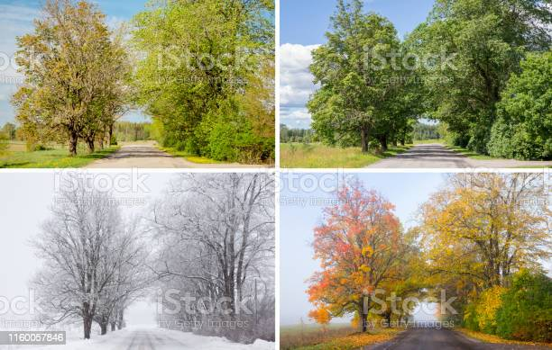 Photo of Beautiful collage of 4 seasons, different pictures of an tree avenue, same spot, place. Spring foliage, green fresh bright summer day, foggy morning with yellow autumn leaves, snowstorm in winter.