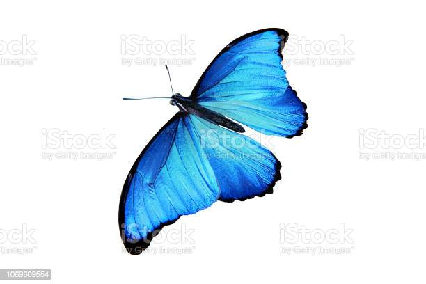 Beautiful color butterfly isolated on white picture id1069609554?b=1&k=6&m=1069609554&s=612x612&h=hj5dnz 0hloi2sl6zawepvz n2q3b0hjj3punnfwxoe=