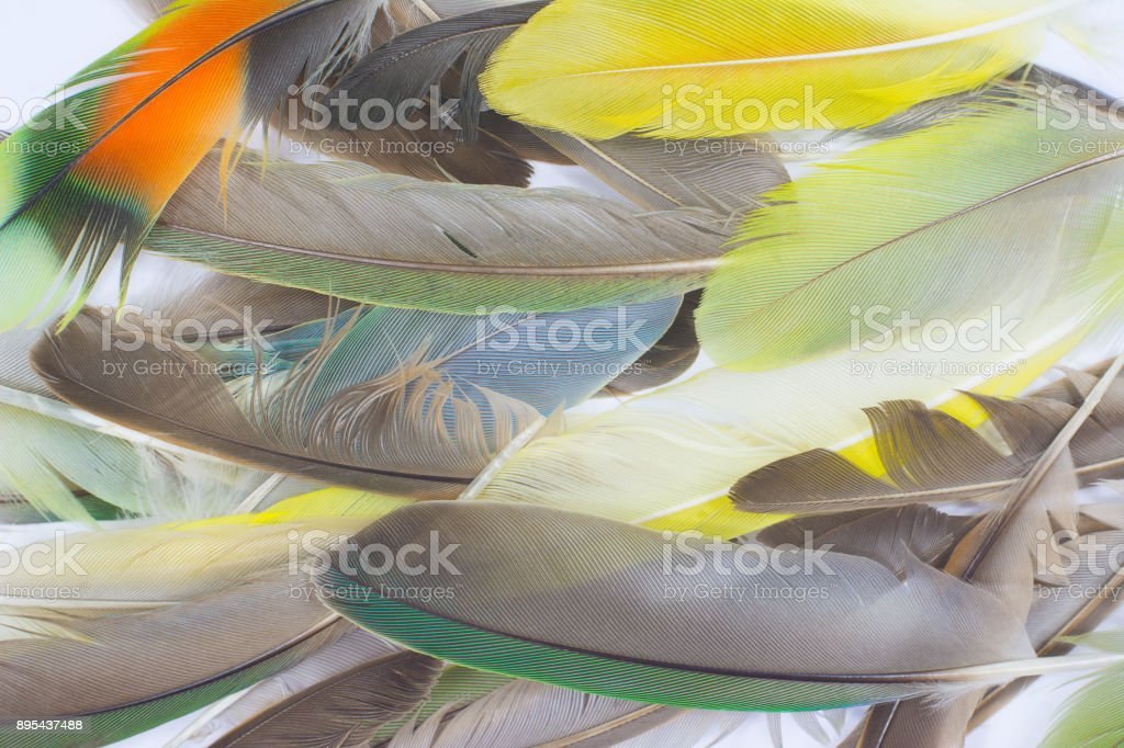 Beautiful  color feathers stock photo