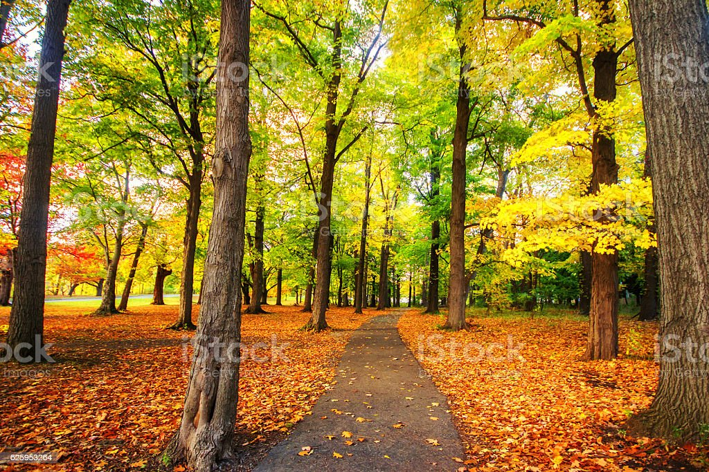 Beautiful colorful Autumn leaves in Rochester City of New York. stock photo