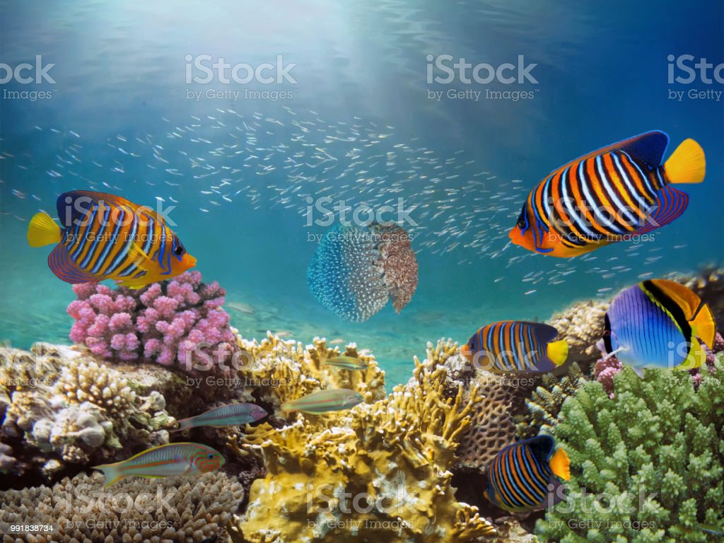 Beautiful colorful coral reef and tropical fish underwater stock photo