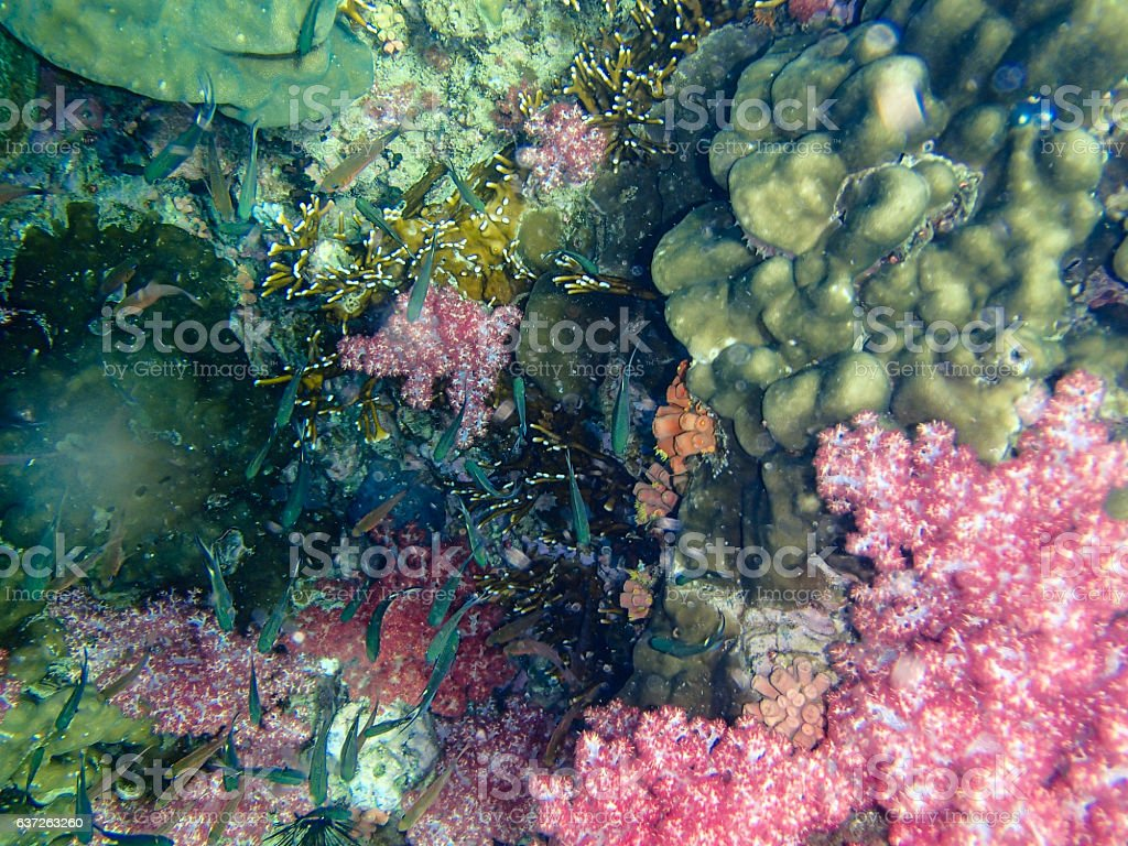 Beautiful colorful coral reef stock photo