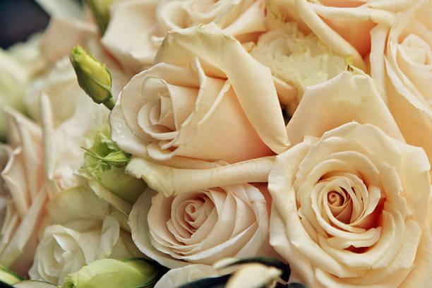 schöne bunte elegante detailansicht der weißen rosen und beine - brautstyling stock-fotos und bilder