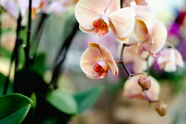 Beautiful colorful exotic orchid flowers stock photo