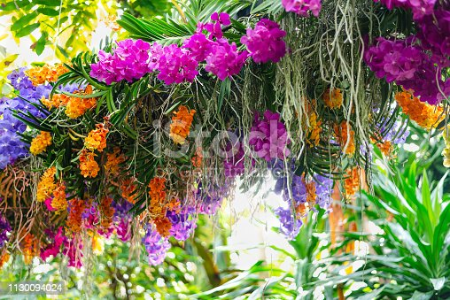 Beautiful colorful flower arangement made of orchid flowers of Columbia