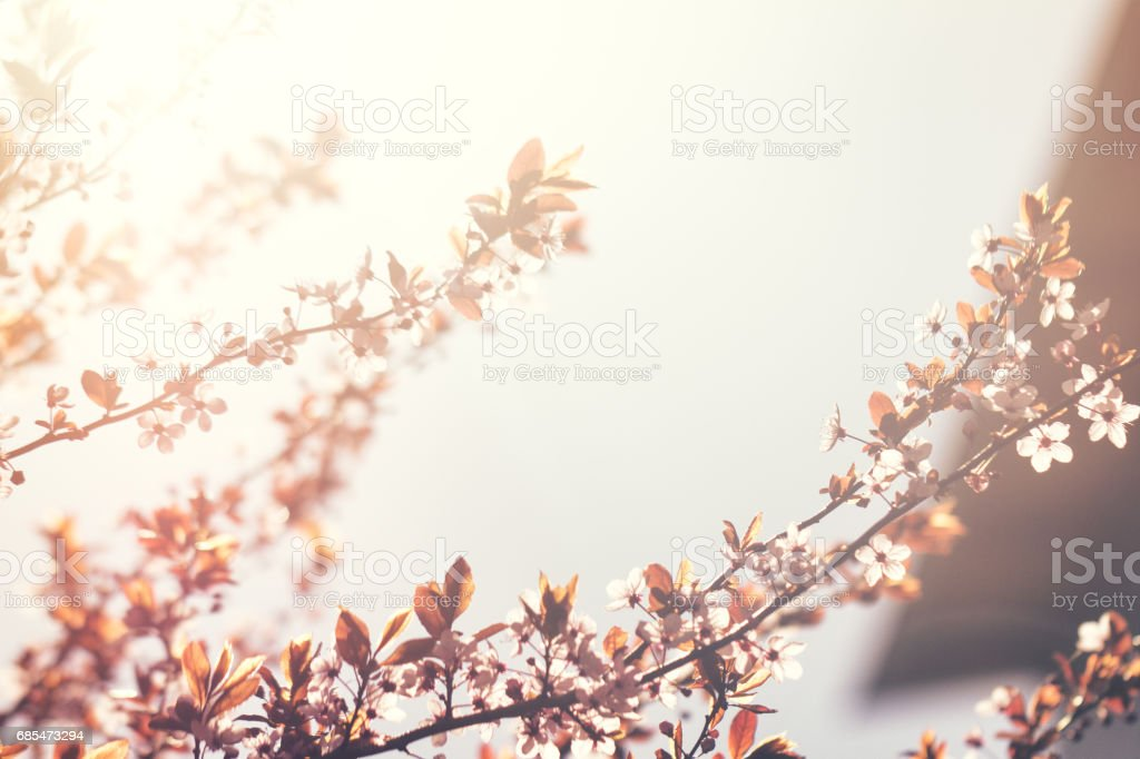 Beautiful colorful Flower Background Blur. Spring Concept. Toning. Selective Focus. foto de stock royalty-free