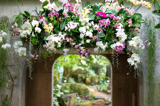 Beautiful colorful flower top of archway arangement made of orchid flowers stock photo
