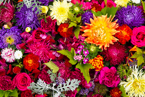 Beautiful colorful flowers background. Aster, carnation and rose flowers. Top view, flowerbed