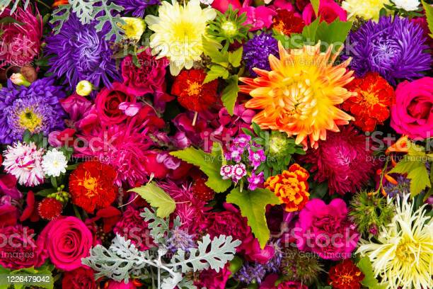 Photo of Beautiful colorful flowers background. Aster, carnation and rose flowers. Top view