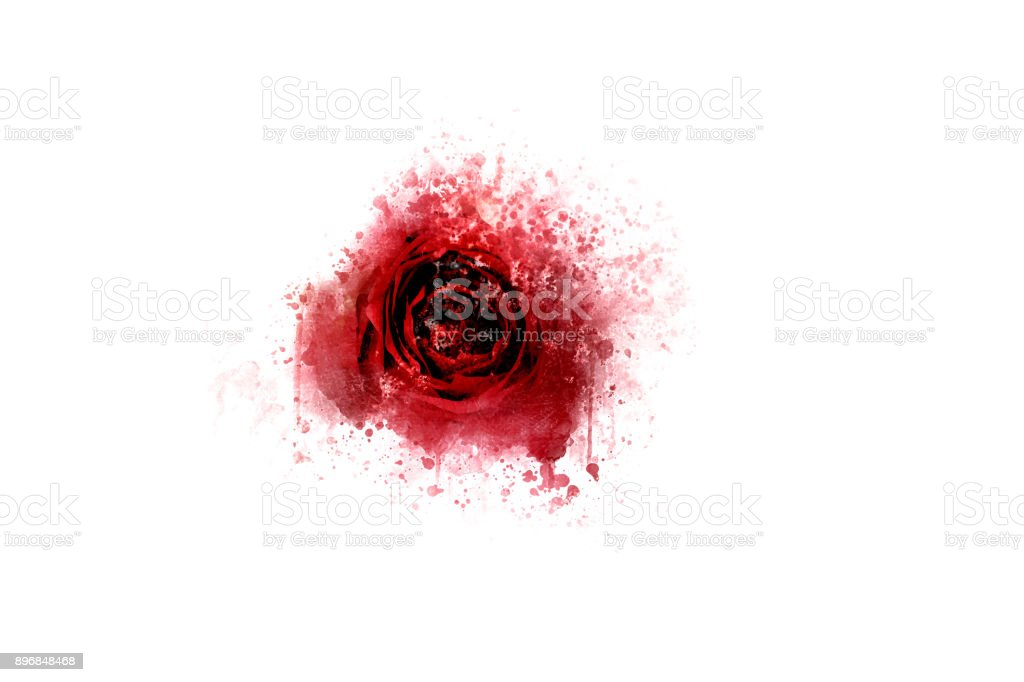 Beautiful colorful rose flower on watercolor painting background. stock photo