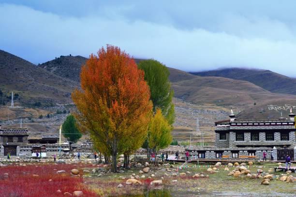 beautiful colorful trees and wetland - ganzi tibet özerk bölgesi stok fotoğraflar ve resimler