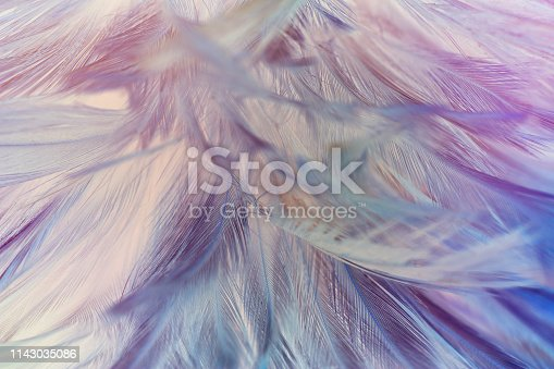 istock Beautiful colorful violet feather pattern texture background 1143035086