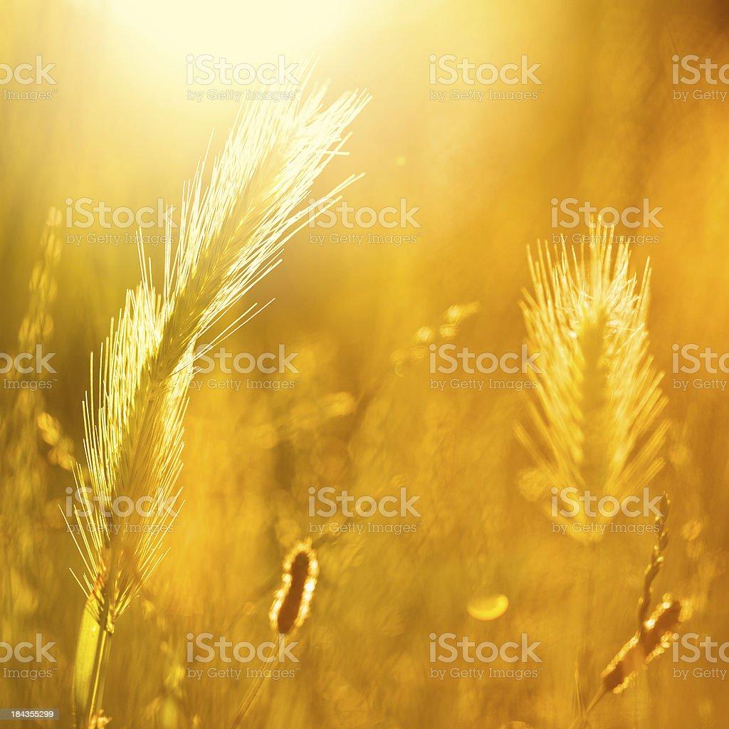 Beautiful colors of nature stock photo
