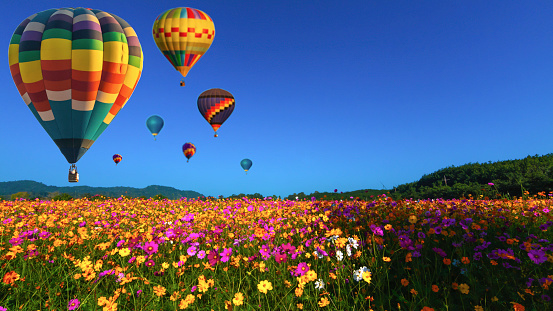 Beautiful colors of the hot air balloons flying on the cosmos flower field at chiang rai thailand