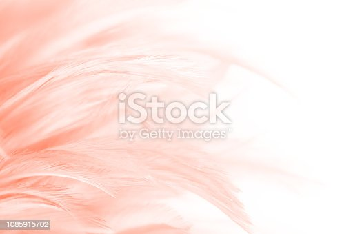 Beautiful Coral Pink vintage color trends feather pattern texture background with orange light