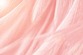 Beautiful Coral Pink vintage color trends feather pattern texture background with orange ligh