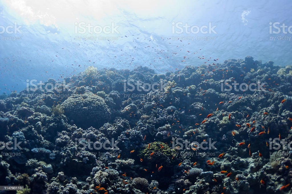 Beautiful coral reef near the Dahab city of Egypt royalty-free stock photo