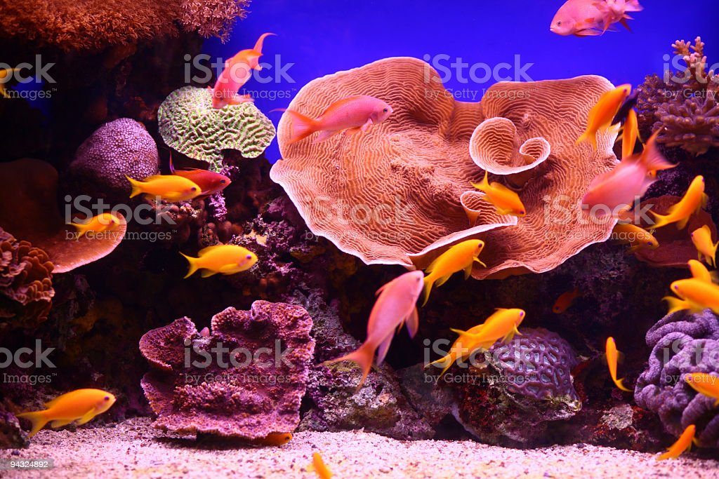 Beautiful Corals with lot of tropical fish stock photo