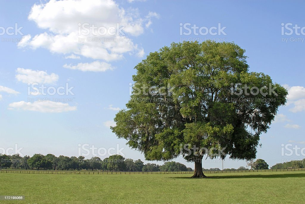 Beautiful Country Landscape royalty-free stock photo