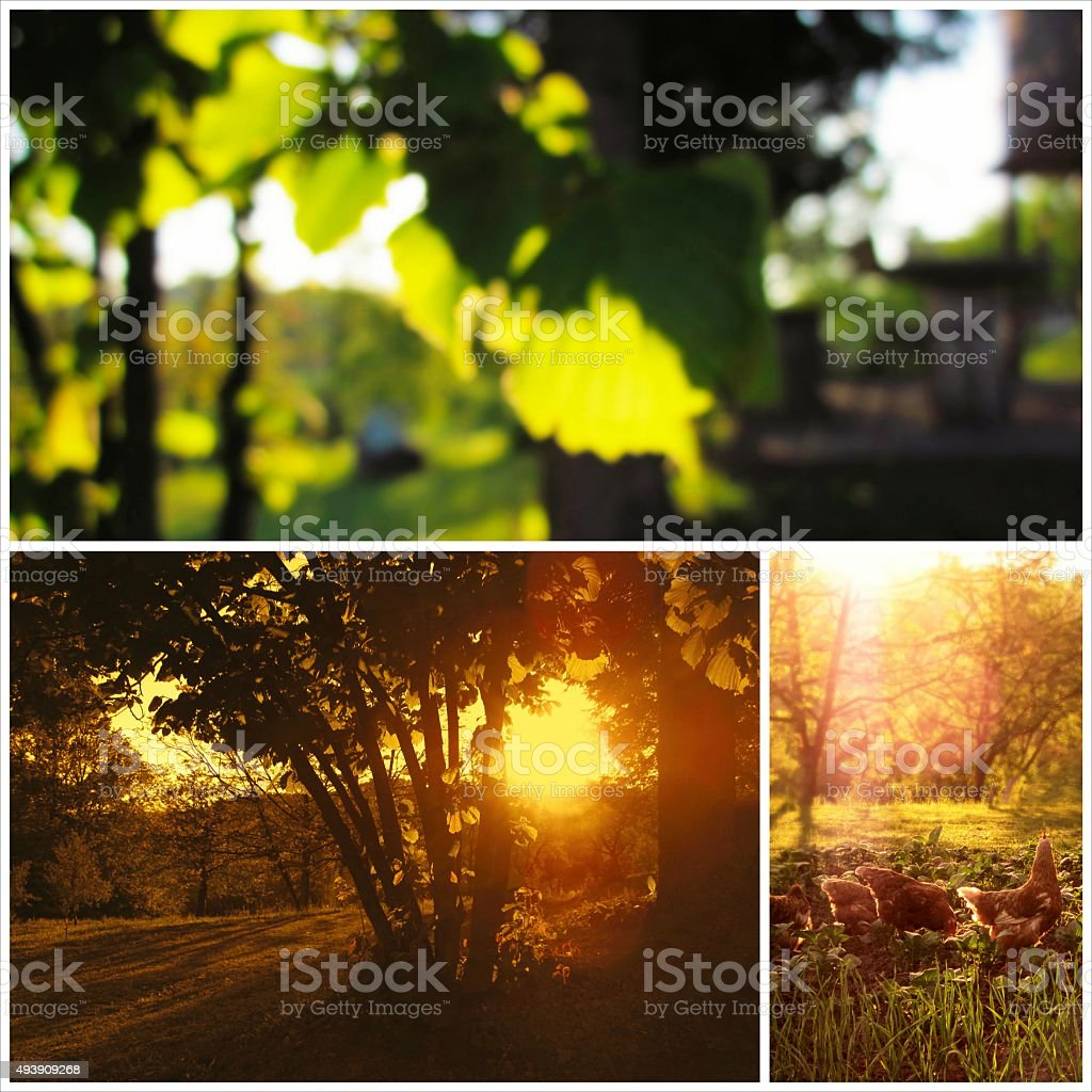 Beautiful countryside collage stock photo