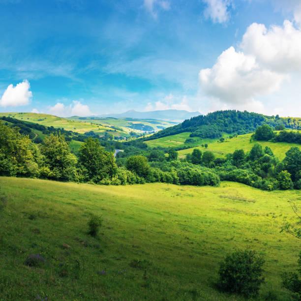 beautiful countryside summer landscape stock photo
