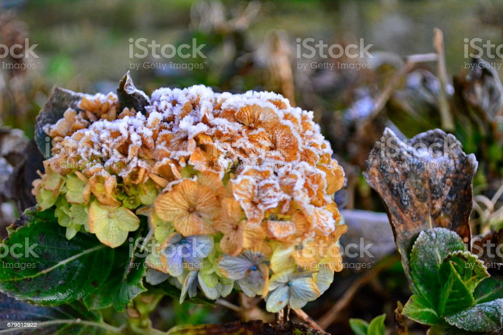 Beautiful countryside with frost royalty-free stock photo