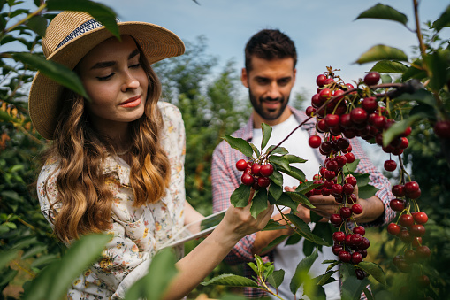Beautiful couple examining orchard