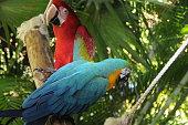 Mexico Natural Park Puerto Vallarta