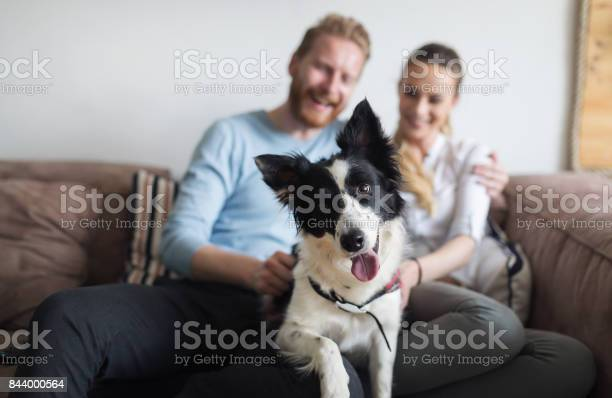 Beautiful couple relaxing at home and loving their dog picture id844000564?b=1&k=6&m=844000564&s=612x612&h=hoc47fgz7sp2vs6yy83qsd pijzitslkvbsimi0exc8=
