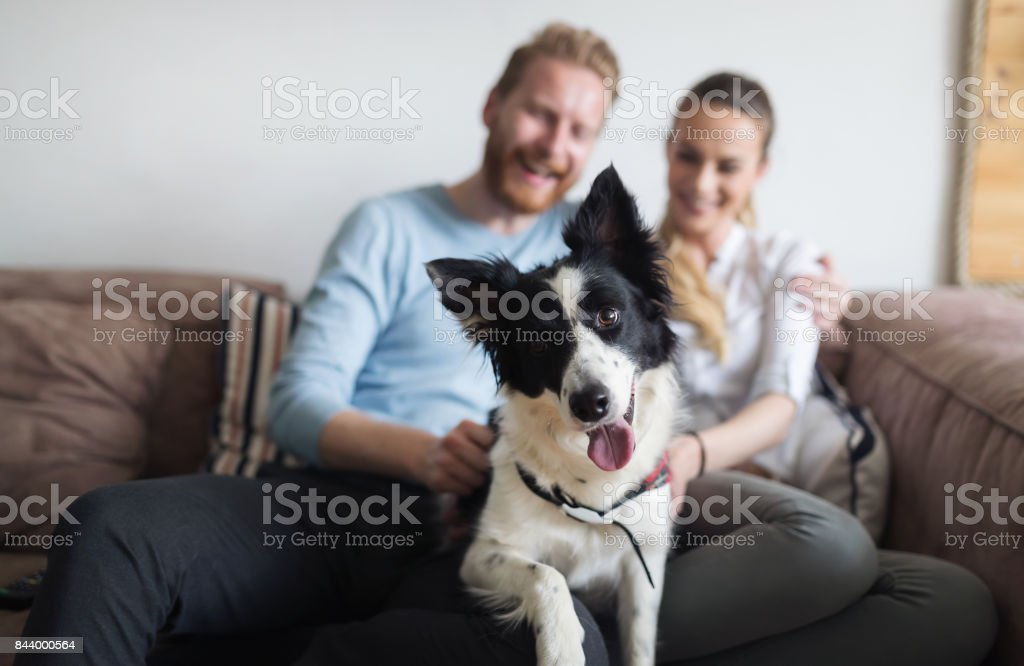 Beautiful couple relaxing at home and loving their dog stock photo