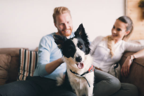 Beautiful couple relaxing at home and loving their pet picture id678776340?b=1&k=6&m=678776340&s=612x612&w=0&h=s4o6f3wlsfgi8vmtaawr6qmjqu9gztn rf7qvqymhf4=